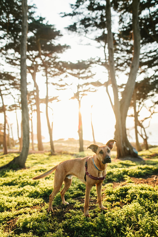 San Francisco Lands End Pet Photography